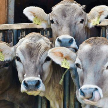 México apuesta por una ganadería sostenible