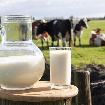 Minagri analiza mejorar normas para la producción de leche evaporada