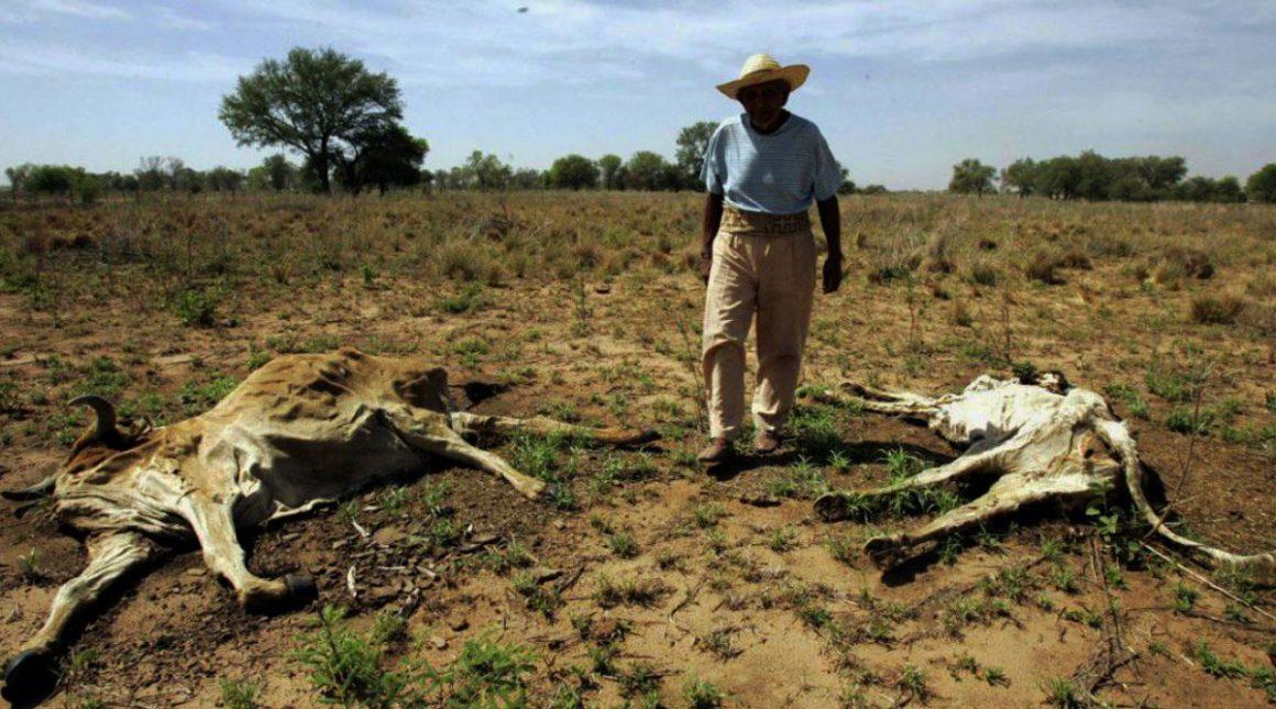 Sequía en Honduras genera la pérdida y muerte de ganado