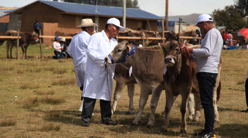 Instalarán posta de inseminación artificial vacuna en Junín