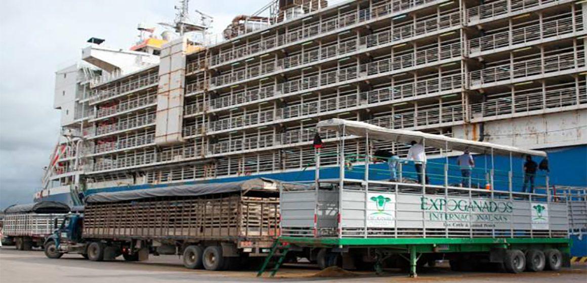 Colombia tiene el embarque más grande de ganado