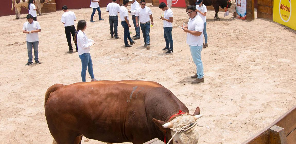 FONDGICARV organizará Festival de Carne y Concurso Nacional de Ganado en Lima