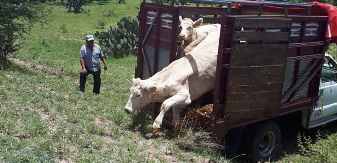 'Cinturón de Control' en México para frenar la ganadería ilegal
