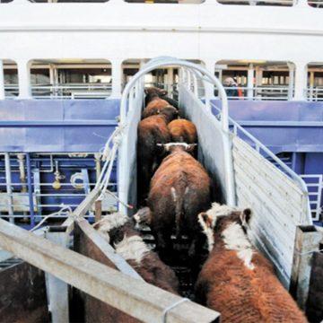 Colombia: eliminan proyecto de ley para exportaciones marítimas de ganado