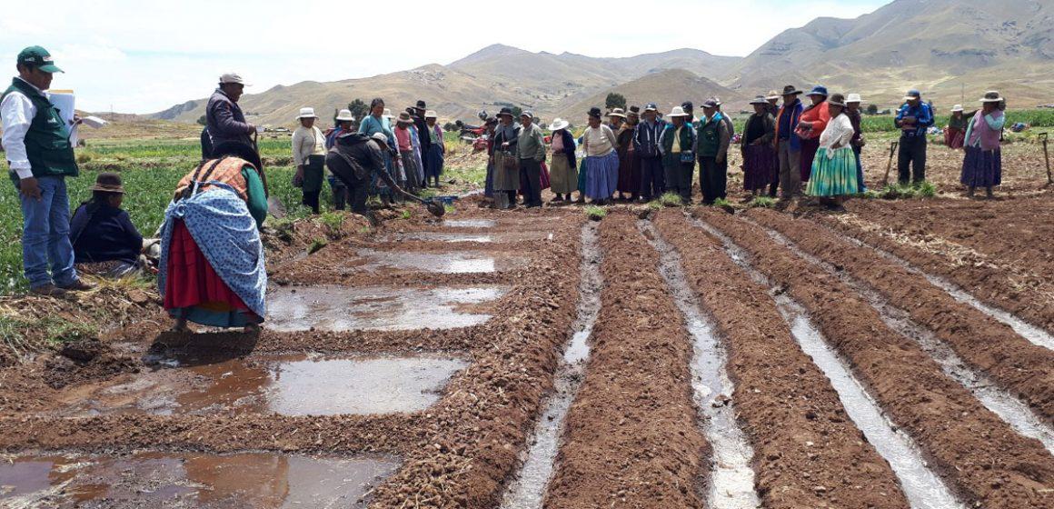 Siembra de pastos beneficiará ganadería nacional