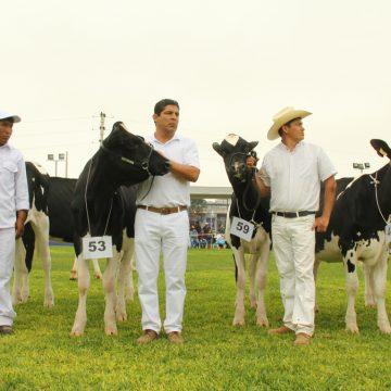 Feria Nacional de Ganado Lechero: la fiesta de la ganadería peruana