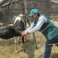 Senasa capacitó a ganaderos en Yauyos