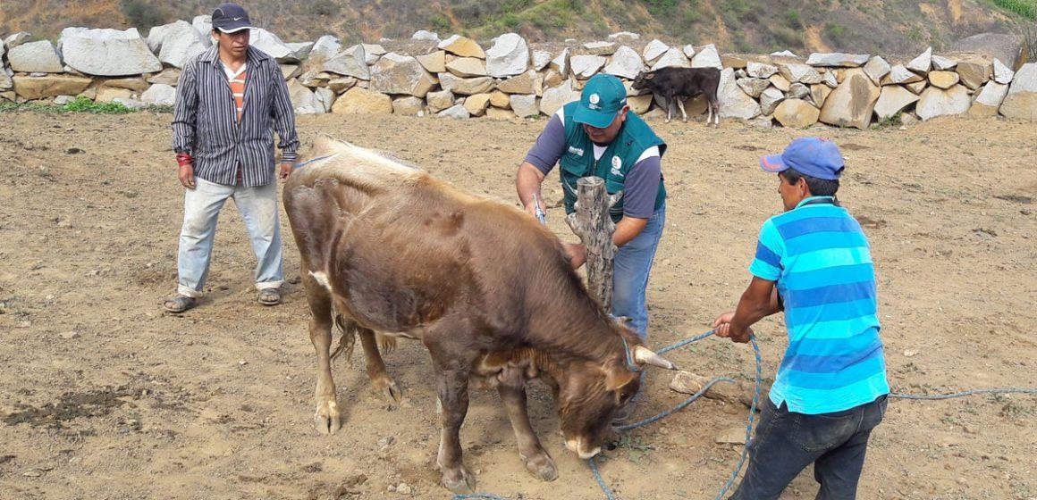 Senasa brindó atención a ganado en La Libertad
