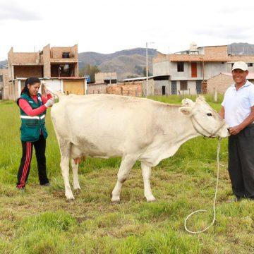 Evalúan ganado lechero para descartar brucelosis