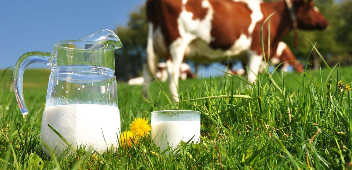 Cajamarca, Cusco y Puno incrementaron producción lechera en un 40%