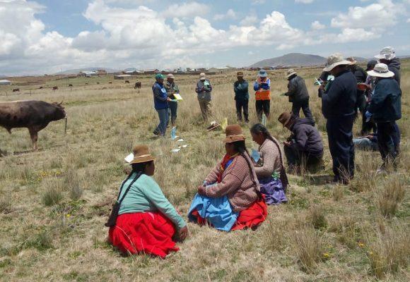 Minagri impulsa ganadería familiar en Puno