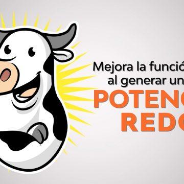 Procreatin7: la mejor solución para el estrés calórico en vacas