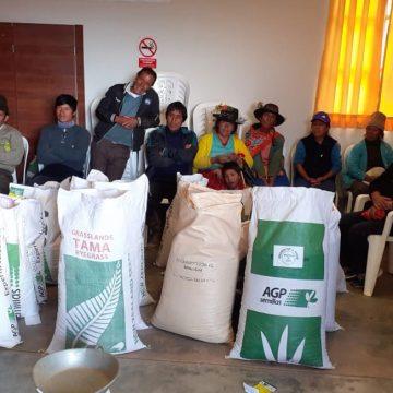Más de 350 kg de pastos mejorarán ganadería en Huánuco