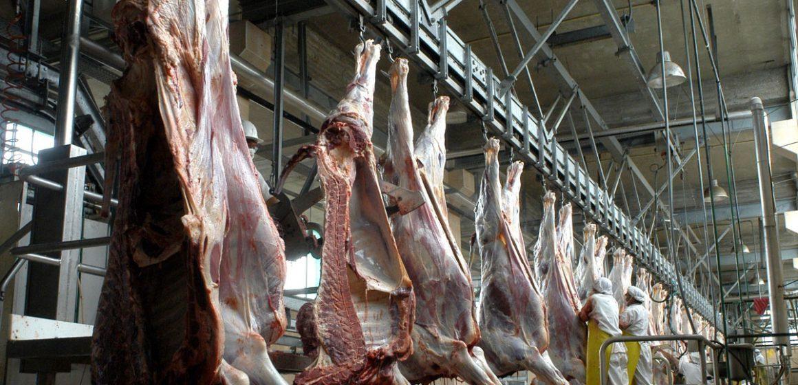 Implementarán mataderos municipales en Arequipa