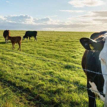 ¿Cómo el manejo correcto de pastos influye en la nutrición animal?