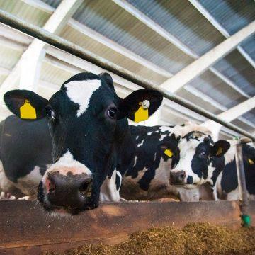 ¿Sabes qué genera inapetencia en los bovinos?