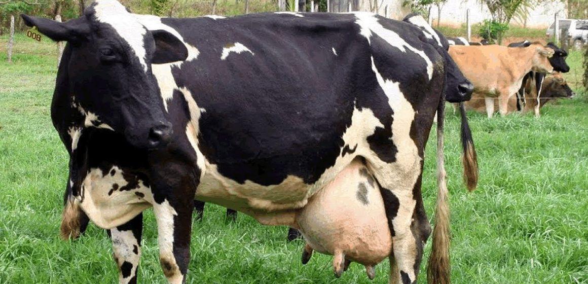 Covid-19: suministro de leche en México está garantizado