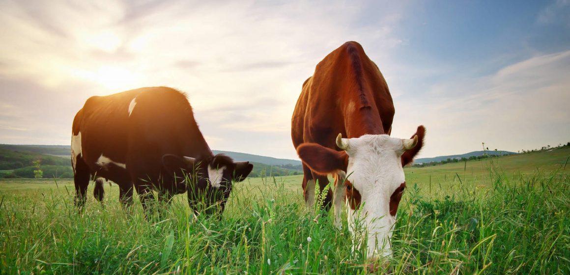 Uruguay: exportación de carne de vacuno disminuye