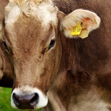 Japón: importaciones cárnicas disminuirán según USDA