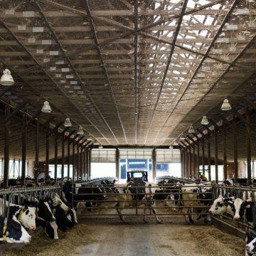 Brasil: abastecimiento de carne de vacuno está asegurado