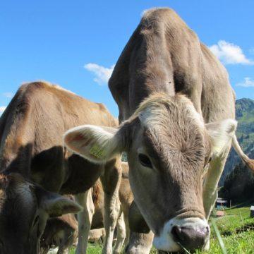 México: mortalidad en el ganado es menos del 0.6%, señala la Sader