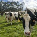 Argentina: exportaciones de carne de vacuno bajaron un 19,4%