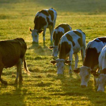 China: normas de residuos de hormonas en carne podrían cambiar tras acuerdo comercial con EE.UU.