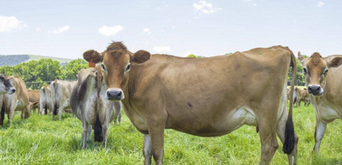 México: producción lechera aún no se ve afectada por el COVID-19