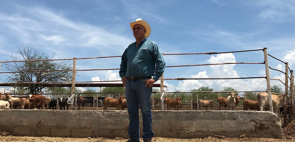 COVID-19 en México: ganadería es afectada en Sonora
