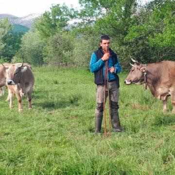 COVID-19: el día a día de los ganaderos de la Montaña Leonesa en España durante la Pandemia