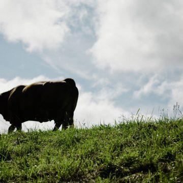 INRA devela falsedades sobre producción de carne