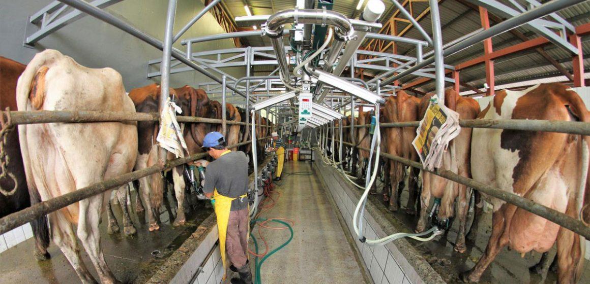 En Chile piden medidas para no detener producción lechera