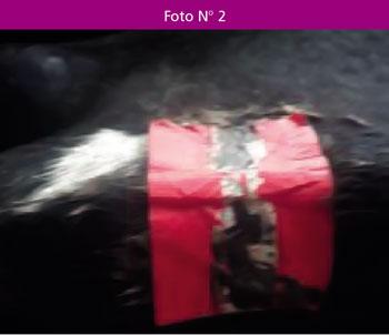 parchestricolores-10