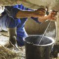 Colombia: empresa lechera donará 10 millones de vasos de leche