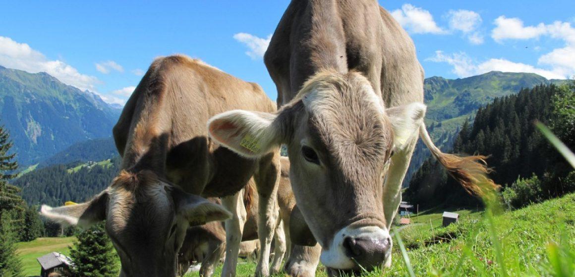 Minagri impulsa acciones para el fortalecimiento de la ganadería en Huánuco