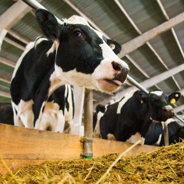 Argentina: producción de carne de vacuno beneficiaria a la demanda en China
