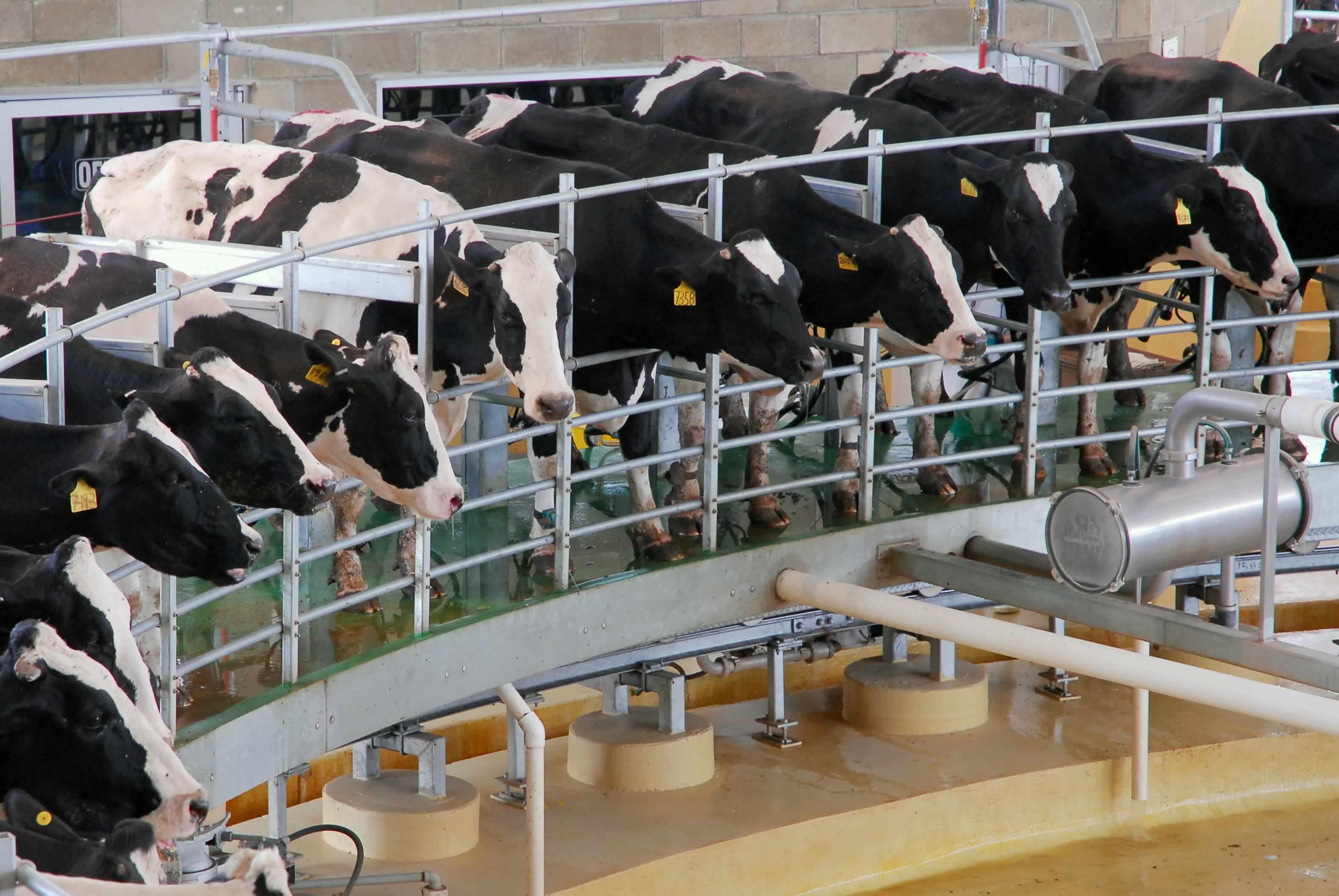 Estados Unidos: producción de leche aumento en marzo
