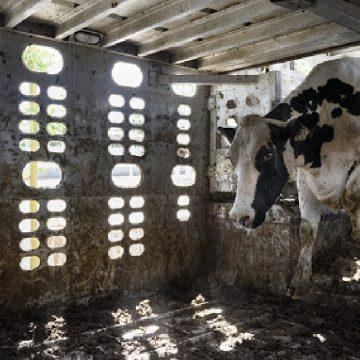 Se espera un retroceso del 5,3%en el valor mundial de las ventas de carne en 2020, según GlobalData