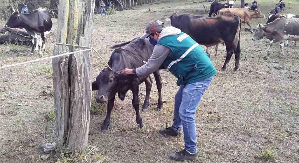 Piura: MINAGRI realiza jornadas de vacunación y prevención de rabia silvestre