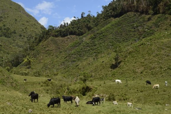 Pasco: Distribuirán kits veterinarios para proteger ganado ante las bajas temperaturas
