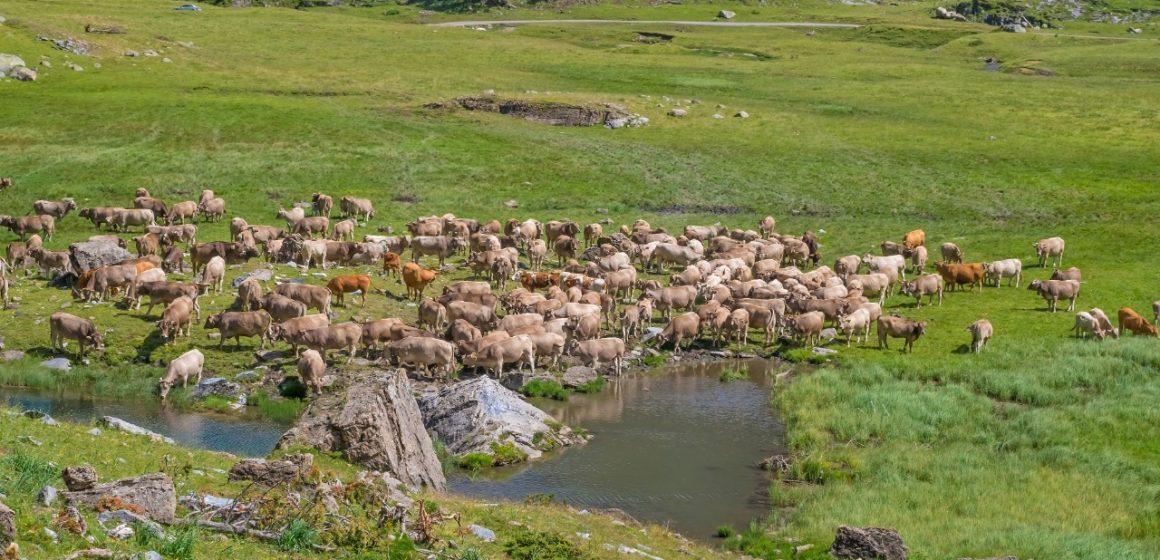 España: Comunidad de Madrid promueve pastoreo controlado como medio para prevenir los incendios forestales