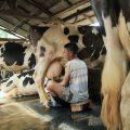 Sector agropecuario creció en 2,1% en el primer semestre del año