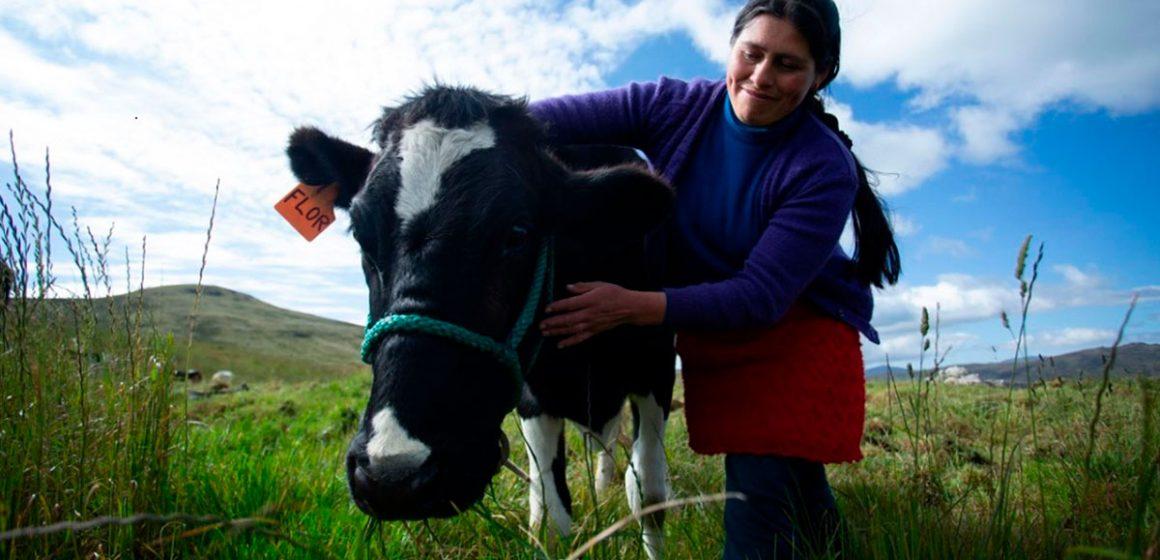 Agrobanco reactivará ganadería peruana