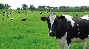 Daño en el tejido mamario durante la mastitis bovina (Parte II)