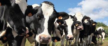 Daño en el tejido mamario durante la mastitis bovina (Parte III)