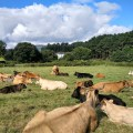 Entrevista: Manejo del estrés por calor en la ganadería bovina
