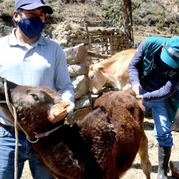 Ganaderos de Ancash inician certificación de hatos libres de Tuberculosis y Brucelosis Bovina