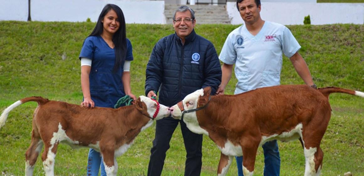 Clonación bovina en el Perú