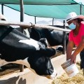 Aprueban seguro pecuario que beneficiará a 83,000 ganaderos del país