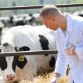 Aprueban Ley de Trabajo del Profesional de Salud Médico Veterinario